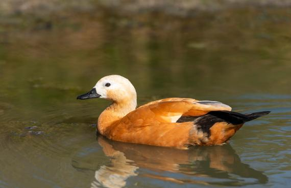Oiseau Marais Poitevin