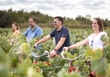 Vélo dans les vignes Domaine de Mourat