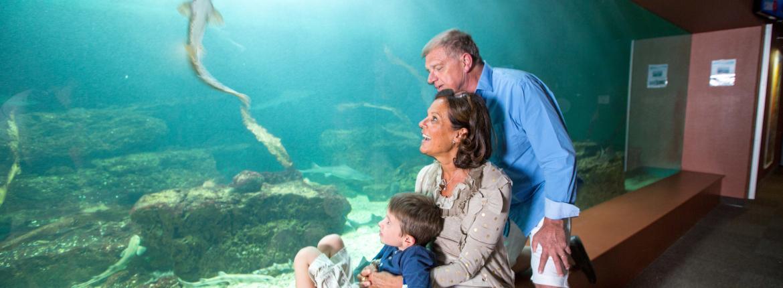 Aquarium de Vendée en famille