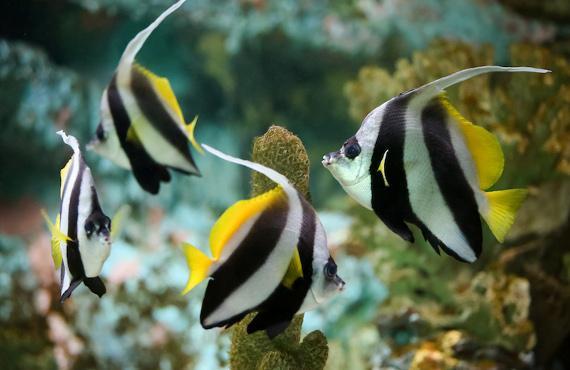 Sealand Aquarium à Noirmoutier en l'île