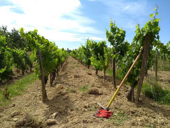 Vignoble Orée du Sabia séminaire Vendée