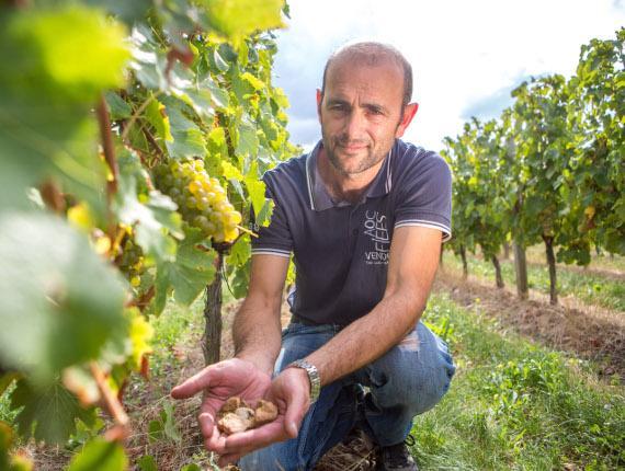 vignoble mercier sud vendée